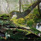 Rain Forest by ZiyaEris