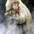 Snow Monkeys by ZiyaEris