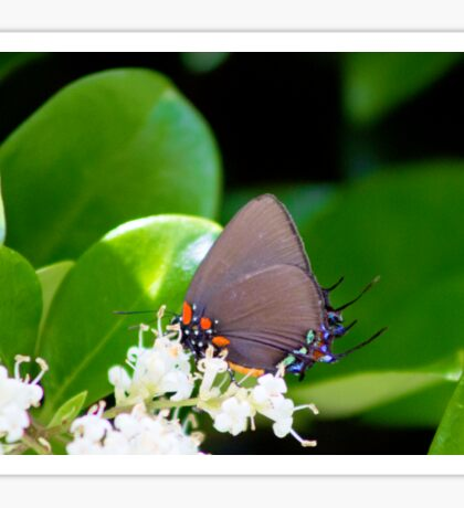 Nectar Gathering Sticker