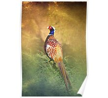 Male Pheasant Poster