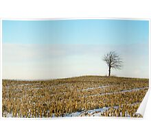 Tree on a corn field! Poster