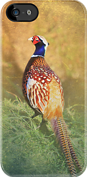 Male Pheasant iPhone/iPod Case by Carol Bleasdale