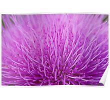 Violet flower on a closeup Poster