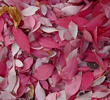 Shades of Pink Leaves by TCbyT