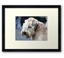 airedale terrier  Framed Print