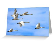 Tundra Swans: The Leaders Greeting Card