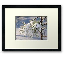 Snow in spruce tree Framed Print