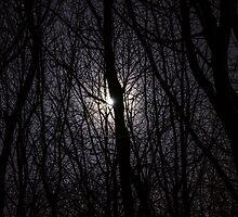 Midnight Ramblings by Nick Field