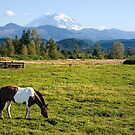Paint Horse and Mount Rainier by Stacey Lynn Payne