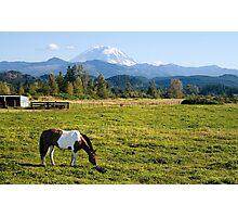 Paint Horse and Mount Rainier Photographic Print