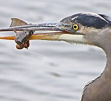 Expert Angler by Heather King