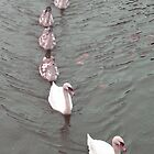 The Family Swan by KarenJI1962