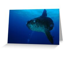 Sunfish (Mola Mola) Cocos Island, Indian Ocean, Australia Greeting Card