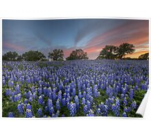 Bluebonnet Field of Glory, San Saba County, Texas Poster