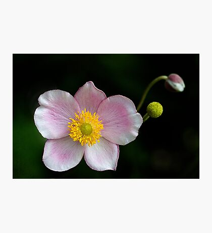 Japanese Simplicity Photographic Print
