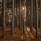 Afternoon in the Pines by Otto Danby II