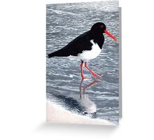 Pied oystercatcher Greeting Card