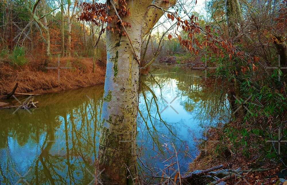Sweetwater Creek, Douglasville, Georgia by Scott Mitchell