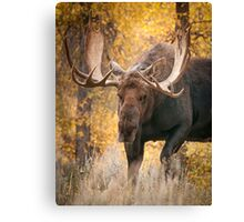 Bull Moose in the Aspens Canvas Print