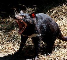 Devil's Roar by GP1746