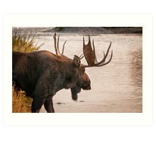 Bull Moose at the Snake River Art Print