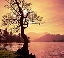 Lakeside Tree by David Lewins