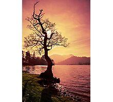 Lakeside Tree Photographic Print