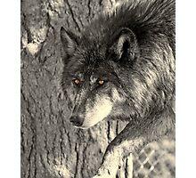 Prowler - BW Photographic Print