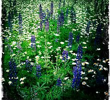 Lupine & Daisies by SheSmiles