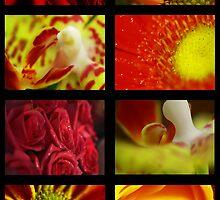 collage. by Tristan Duplichain