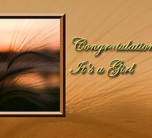 Congratulations It's A Girl Grass Sunset by jkartlife