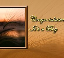 Congratulations It's A Boy Grass Sunset by jkartlife