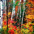 Birch  and Leaves by George Oze