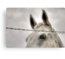 Horse Behind Wire Canvas Print