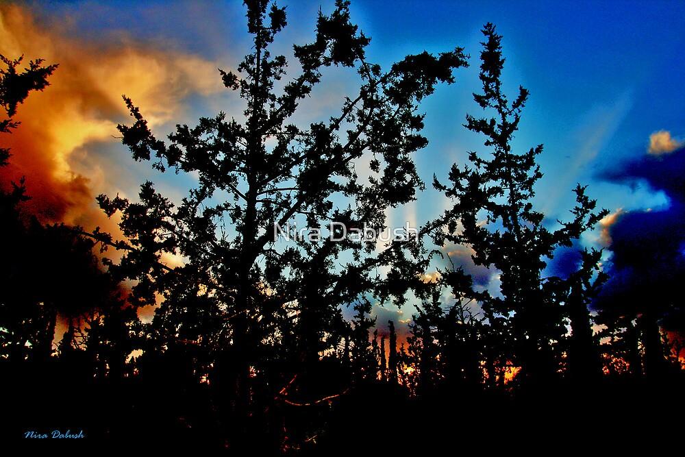 Horshim Forest at Sunset by Nira Dabush