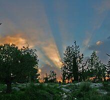 Sunset at the Forest by Nira Dabush
