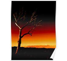 Summer Hill Tree - Fire Sky ... Poster