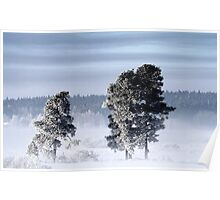 25.2.2013: Pine Trees, Winter Morning Poster