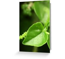 green natural macro heart Greeting Card