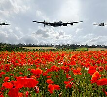 Poppy Flypast by J Biggadike