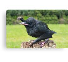 Fist bumping baby Gibbon Raven Canvas Print