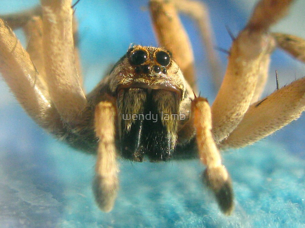 friendly spider by wendy lamb