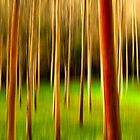 Abstract Trees by Karen Boyd