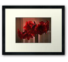 Amaryllus #13 Framed Print