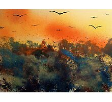 Bats over the jungle Photographic Print