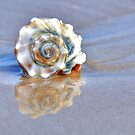 Whelk Reflection by Monte Morton
