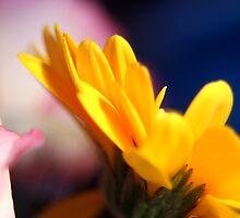 Yellow flower by emilyx93