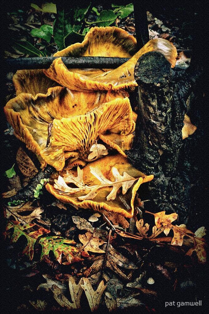 Fungus Among Us by pat gamwell