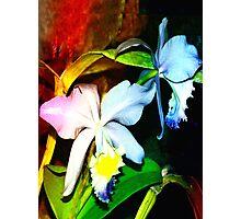 Pond orchids 2 Photographic Print