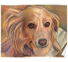 """Sweet Rescue Dog """"Emily"""" Poster"""